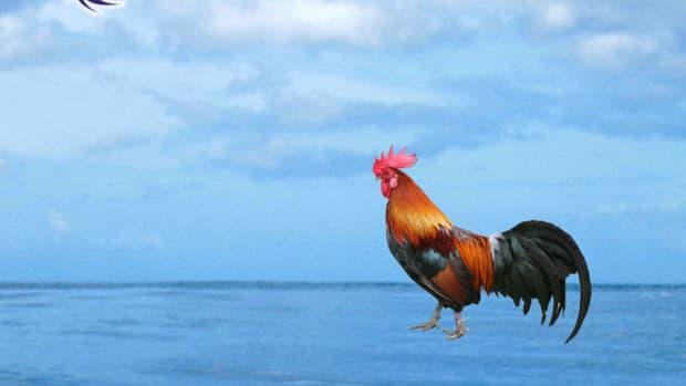 seacock