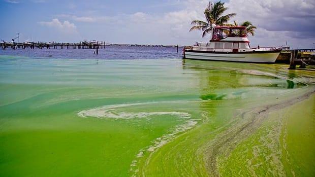 algae0708