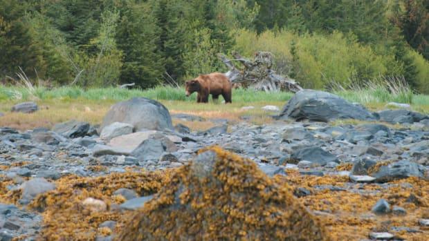 Bears 01 A-p17udq35l01jfbu8hhcj13vlin8