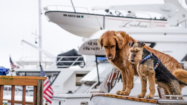 dogsonboat