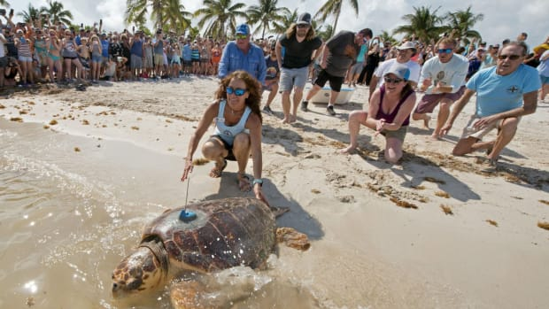 Turtle Opener