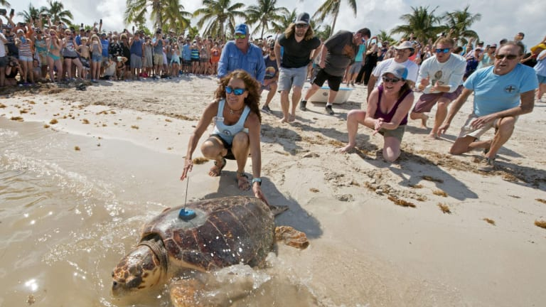Injured Turtle Returns to Sea With A High Tech Upgrade