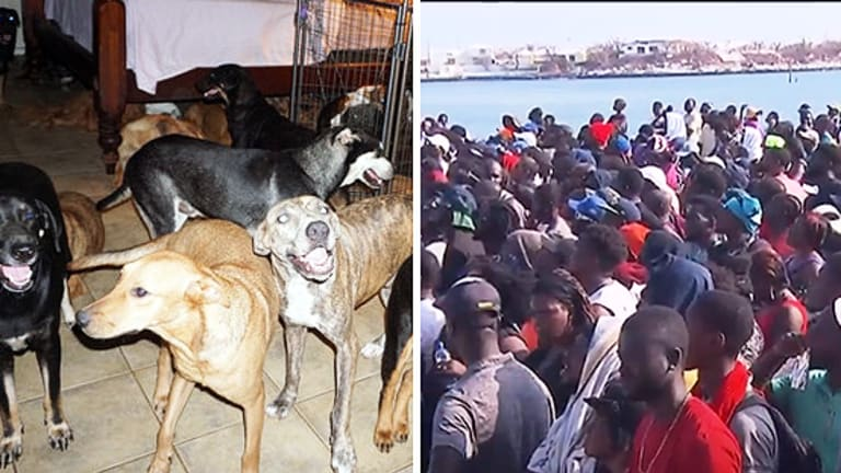USA Welcomes Bahamian Dogs; Her Refugee Humans? Not So Much