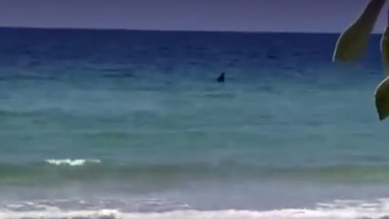Big Shark Lurks Off Tampa (Video)
