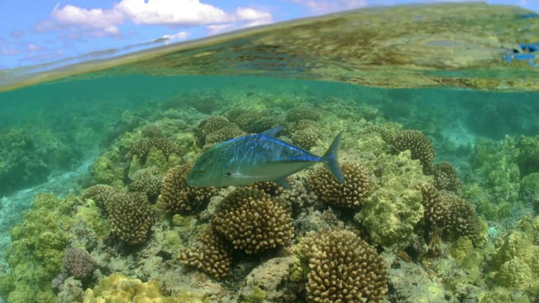 Why We Need More Marine Parks