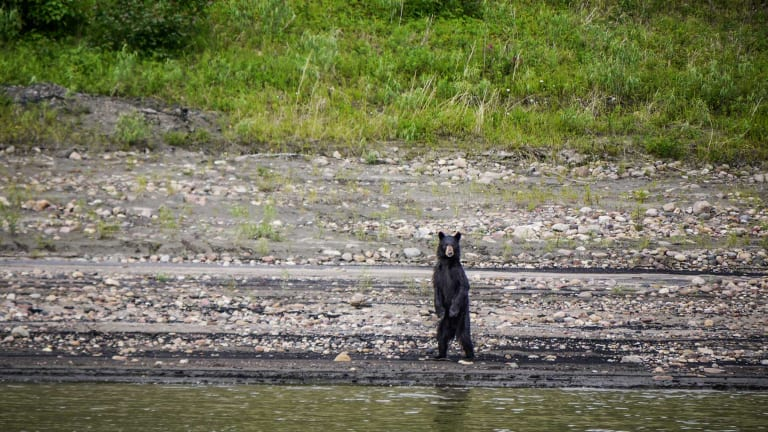 Shoal Draft Cat Goes Where Others Can Bearly Go; For Example, the Arctic (Video)