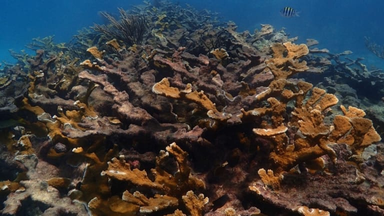NOAA, Partners Launch Florida Keys Coral Reef Restoration Effort