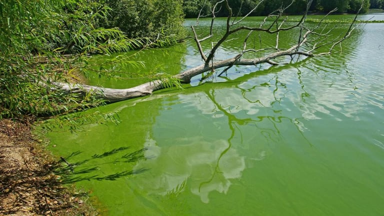 Florida Boaters May Sue Over Blue-Green Algae Concerns