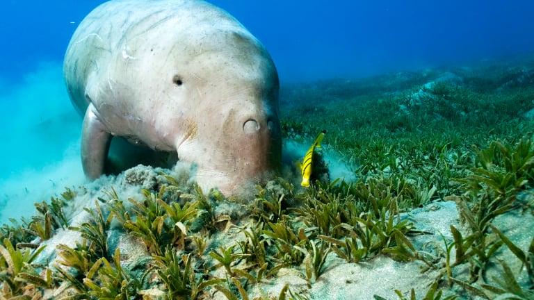 Preserving Florida's Vital Seagrass Habitats