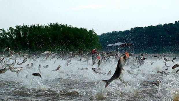 0106-aillinoiscarp-asian-carp-great-lakes-full_full_600