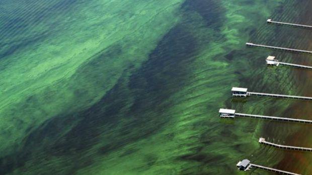 AlgaeBloomSt.JohnsRiver