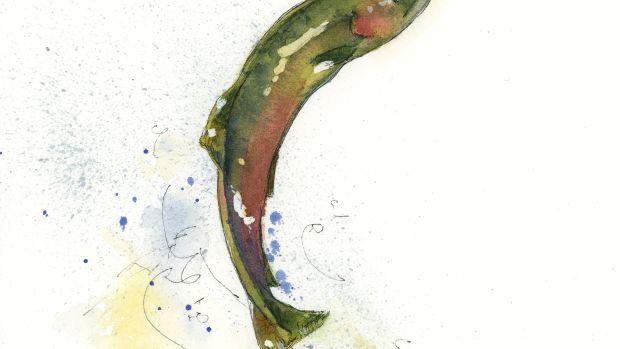 Jump Salmon