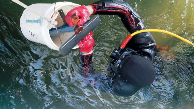 Diving 012-p17udsbm3fl9pcelk2s13quffj