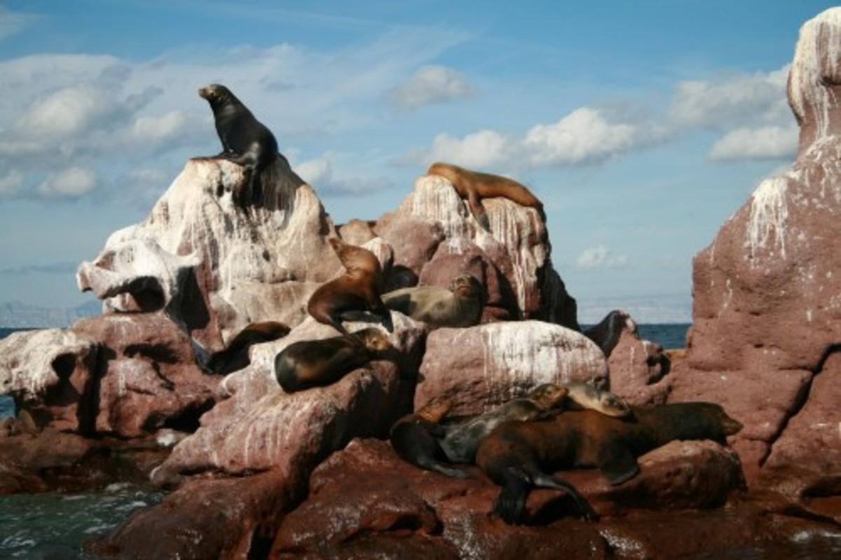 Sea Lions on rocks off La Paz in the Sea of Cortez.