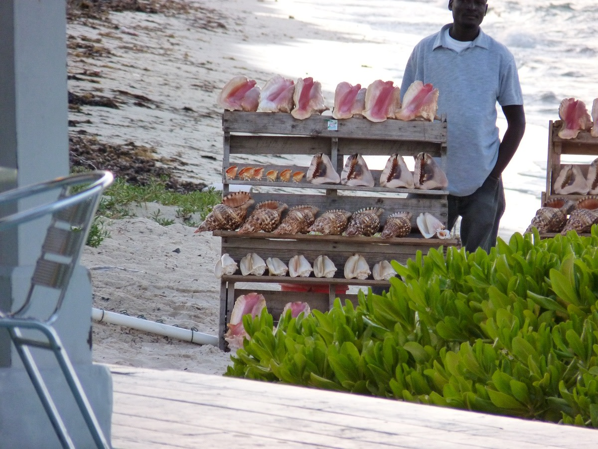 Conch shell vendor at Da Conch Shack