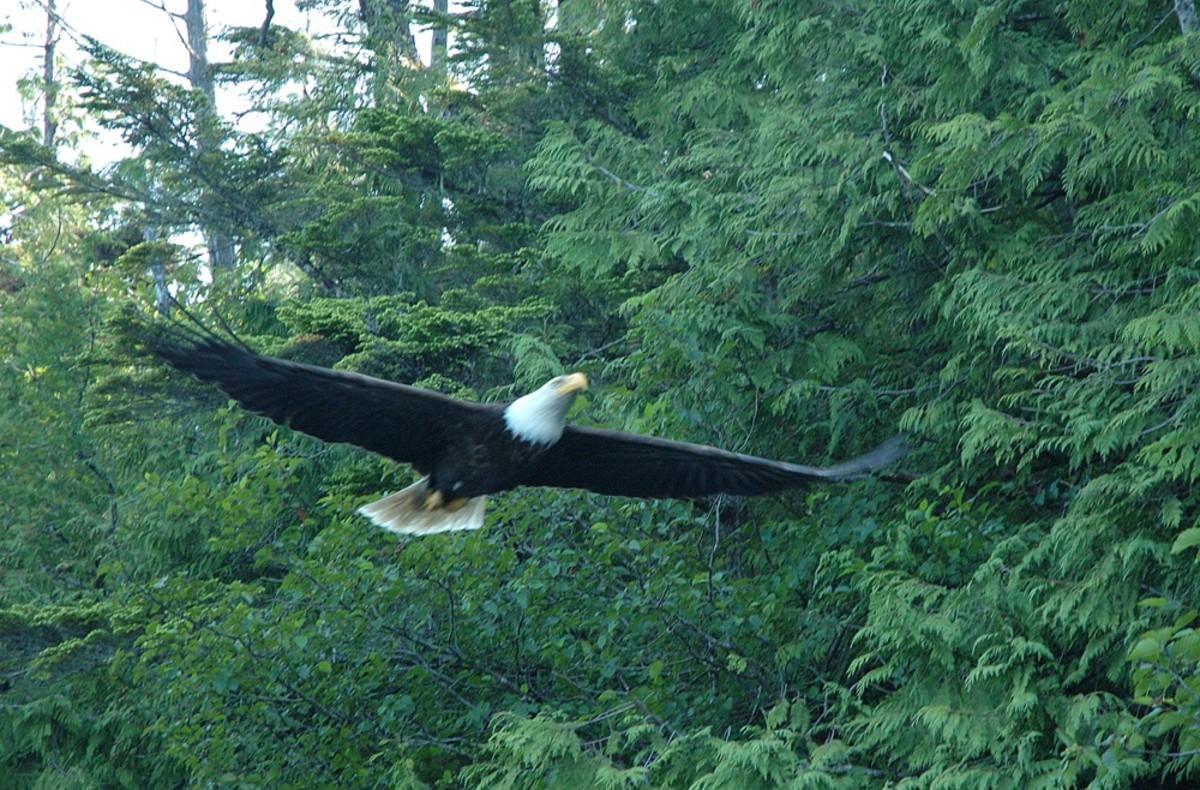 Eagle-San Lorenzo-p17udi4mb311c11n461o9h2ujm1a