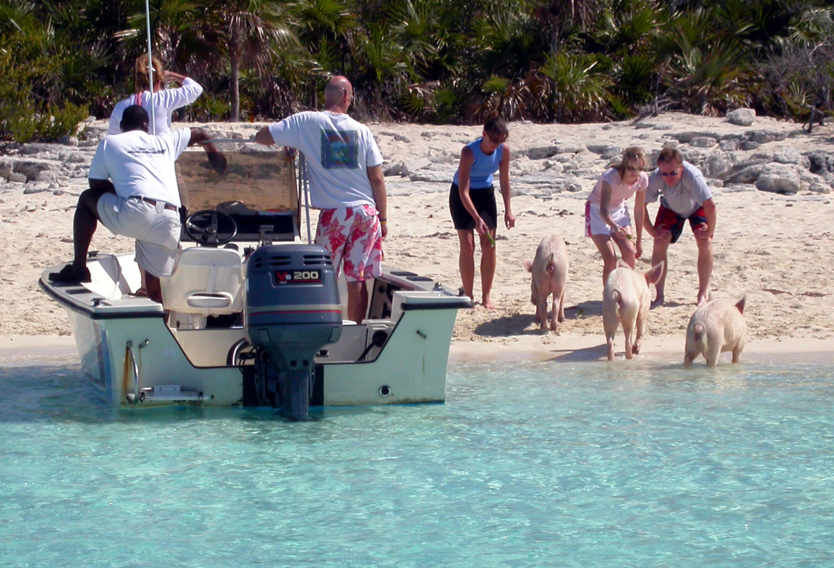 Feeding the pigs is a tradition for foreign boaters visiting Staniel Cay. The pigs live on the adjacent, uninhabited (except by pigs) Big Major.