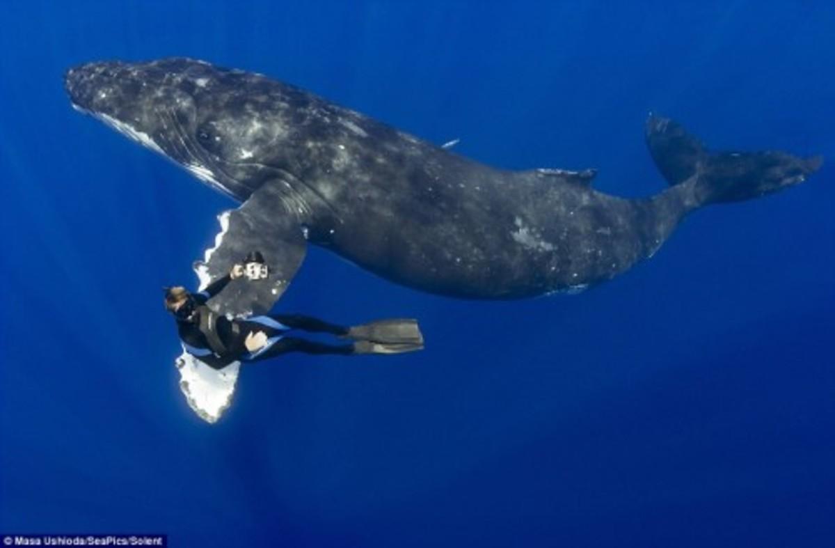 whale0512-500x328