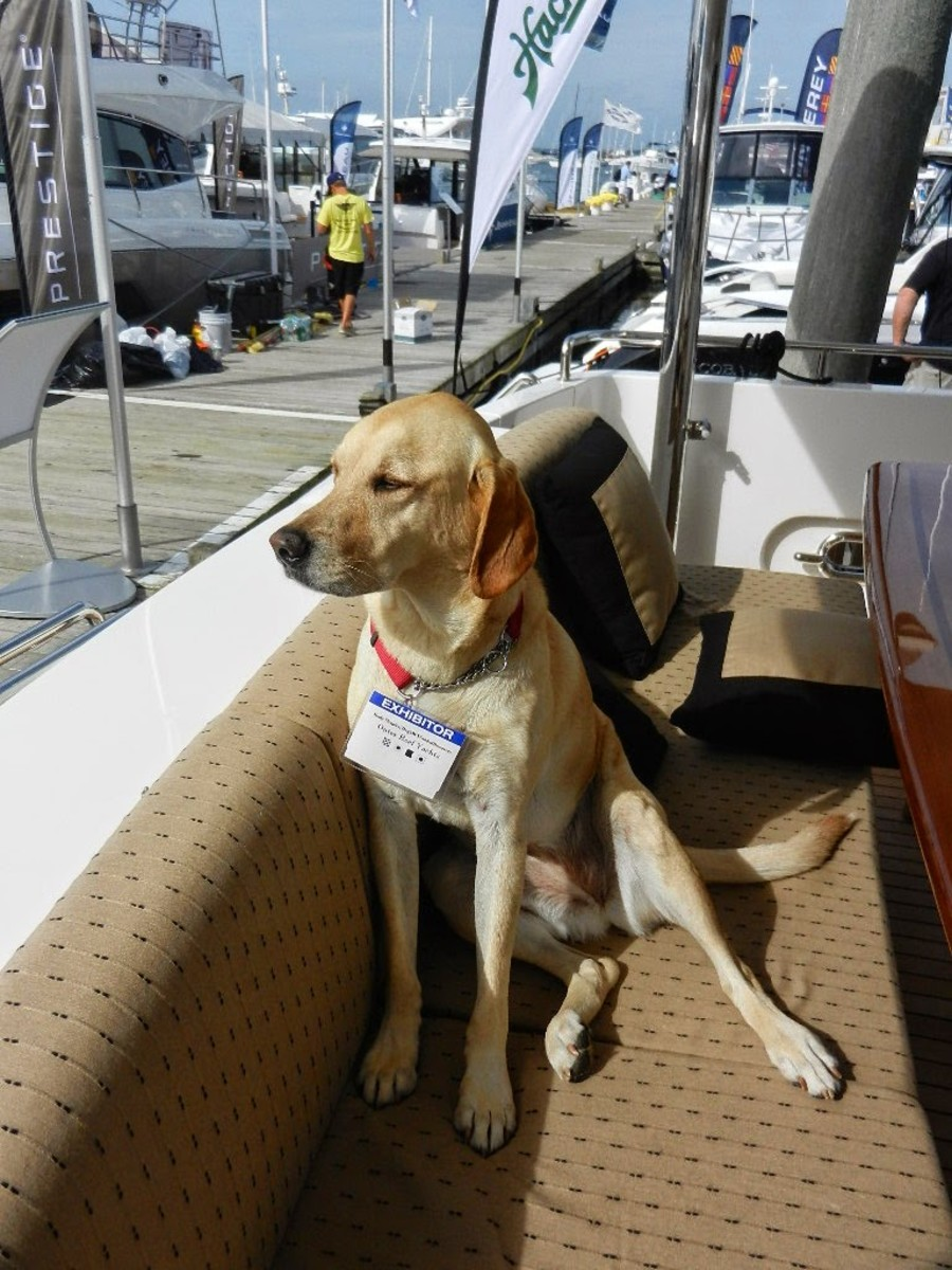 Kodi proudly displaying her boat show credentials.
