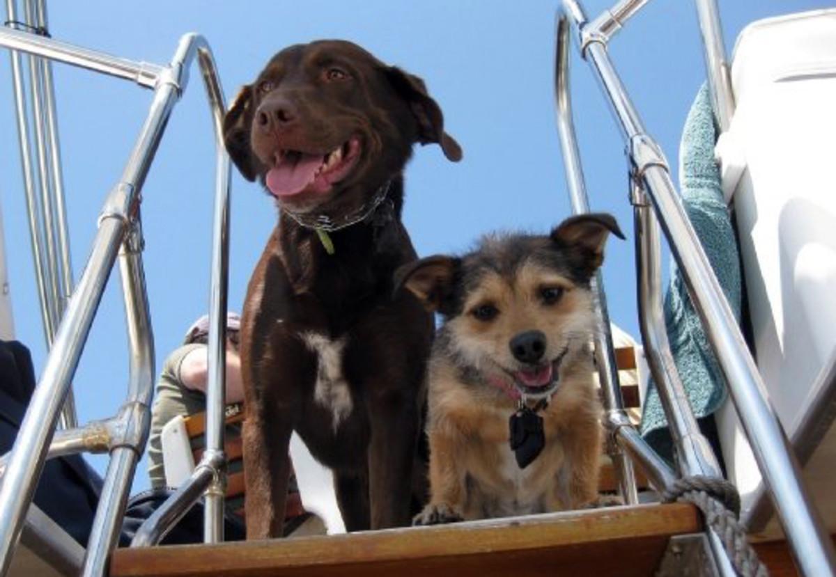 Rosco and Piper