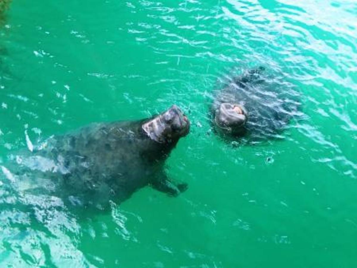 Who doesn't love visiting manatees?