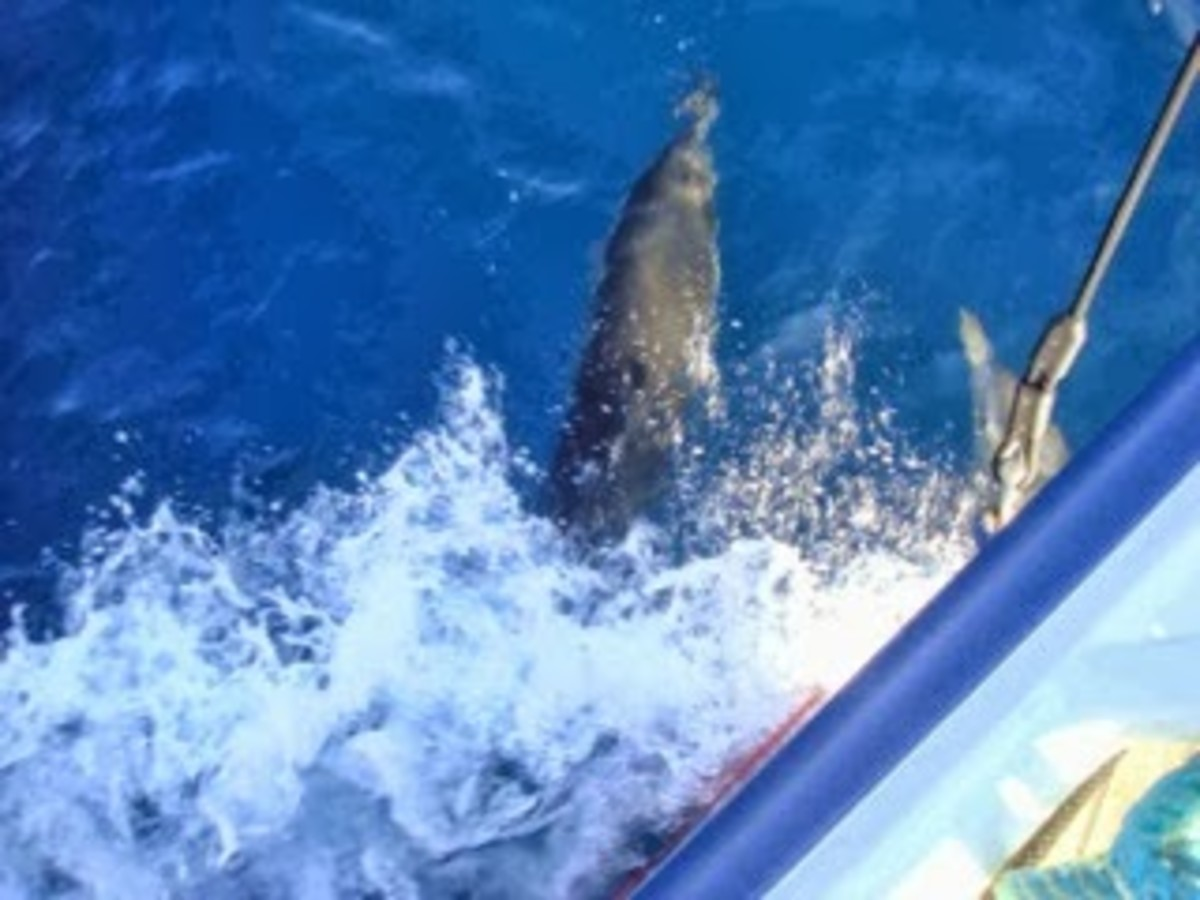 It was exciting to run with a pod of dolphins.