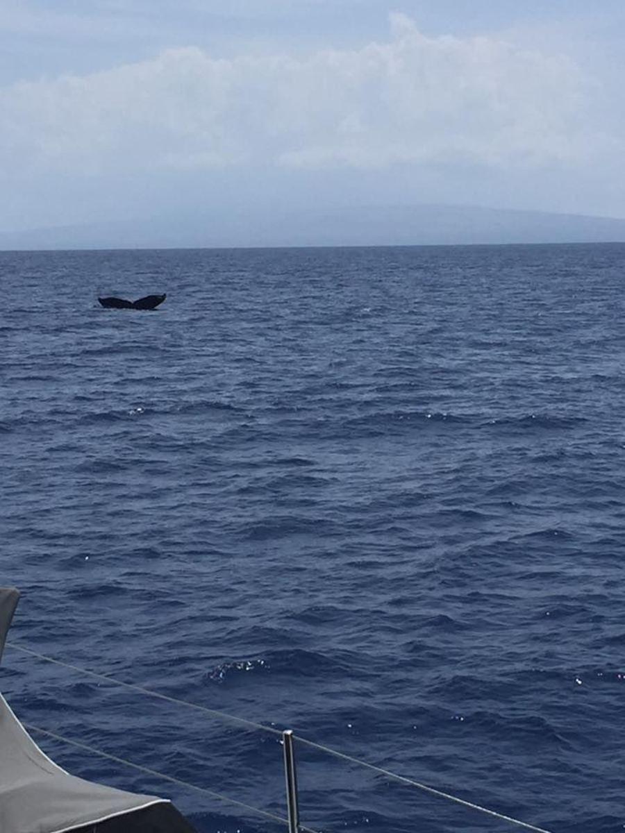 We saw plenty of whales along the way.