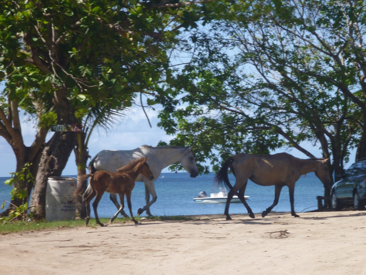 Horses roamed the Esperanza waterfront, and they are one form of transportation to get around town.