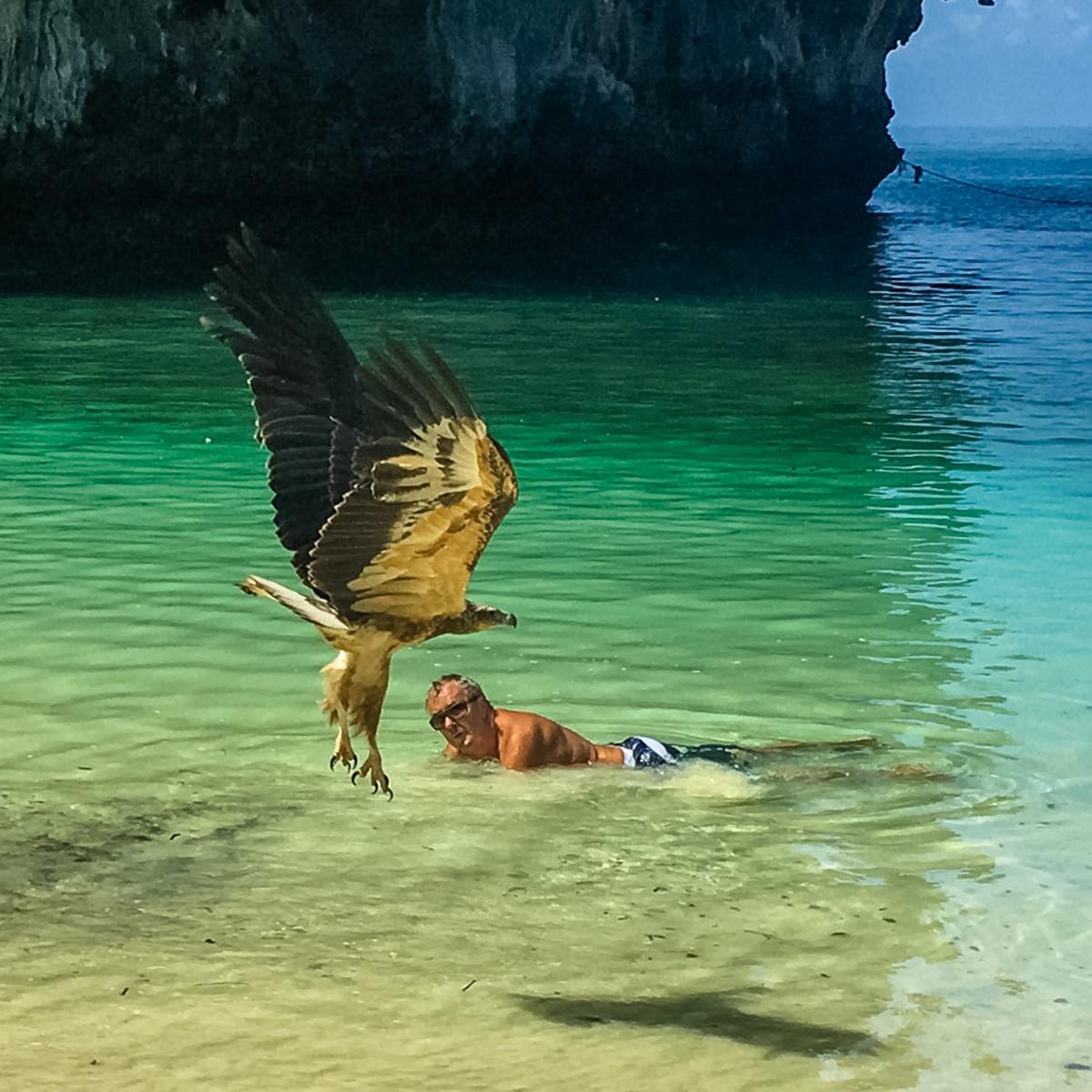 Bird of prey mistakes John for school of fish