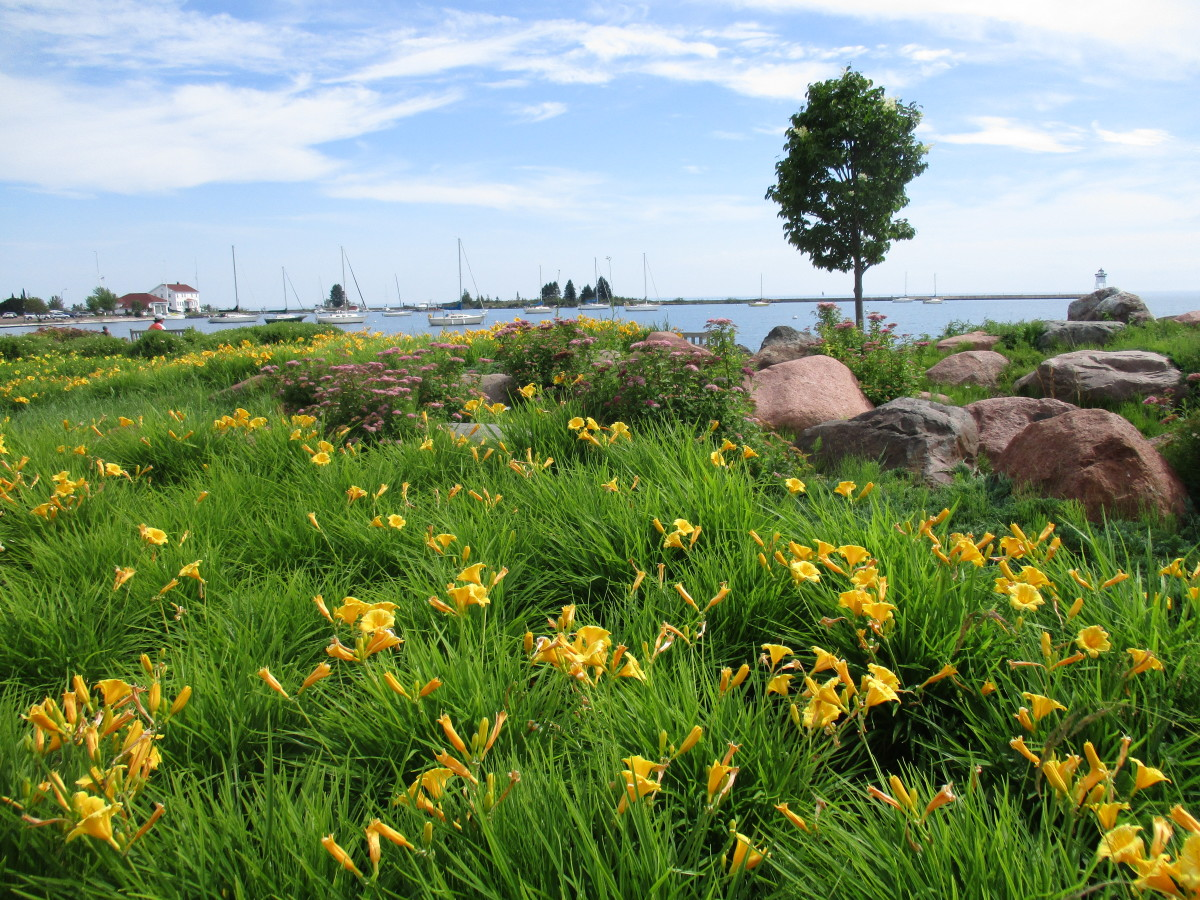 Day lilies and pebble beaches frame the marina in Grand Marais, Minnesota.