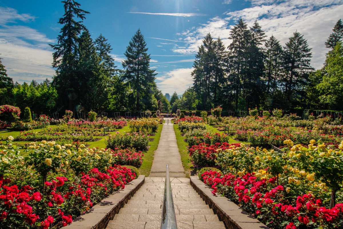 Portland's International Rose Garden boasts over 7,000 rose plants.