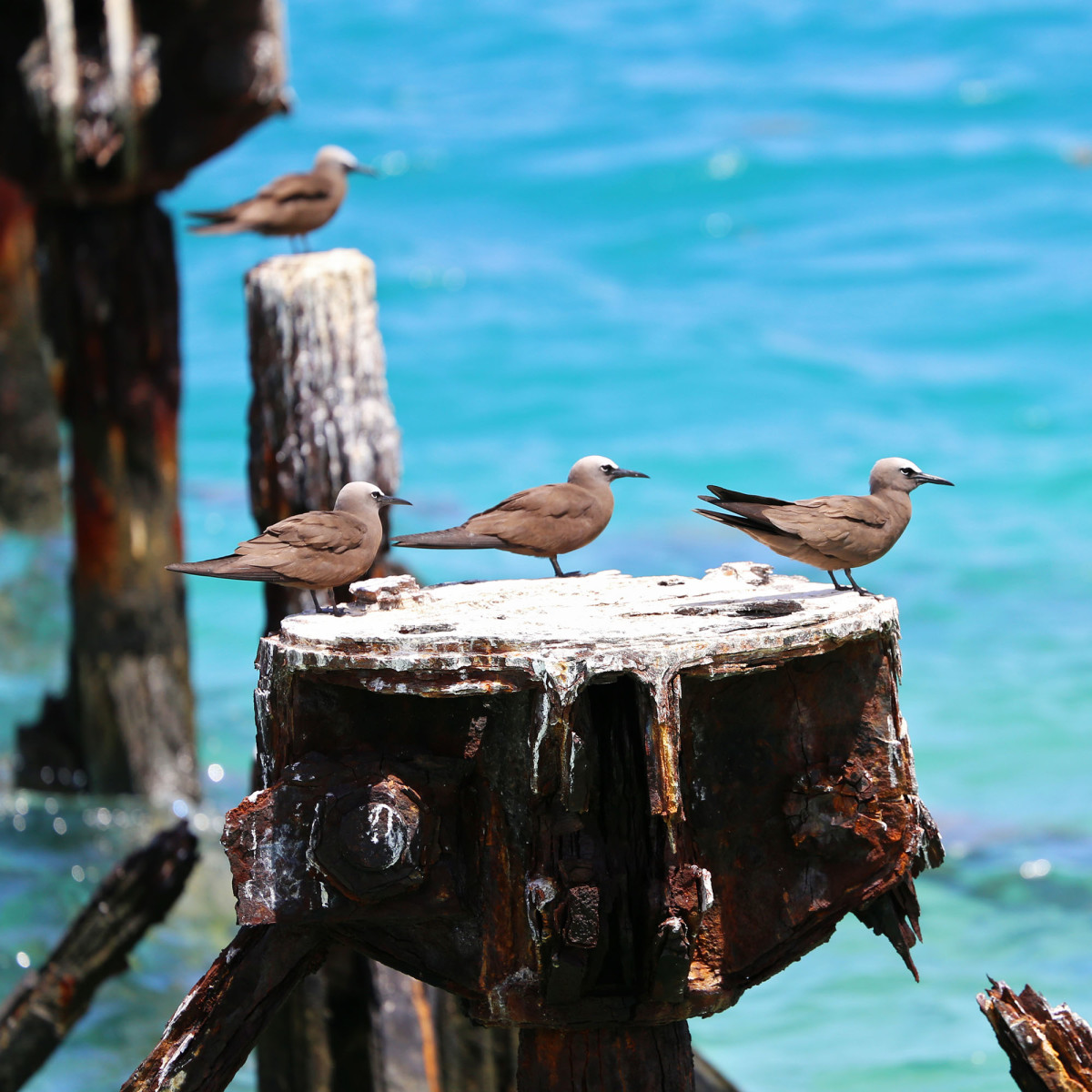 The Dry Tortugas is great for birdwatching.