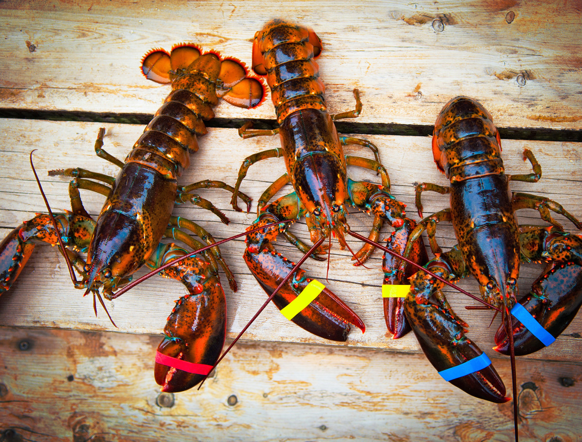 Lobster gained its popularity from brilliant marketing, it was once the food fed to Maine prisoners due to its abundance and lack of popularity.