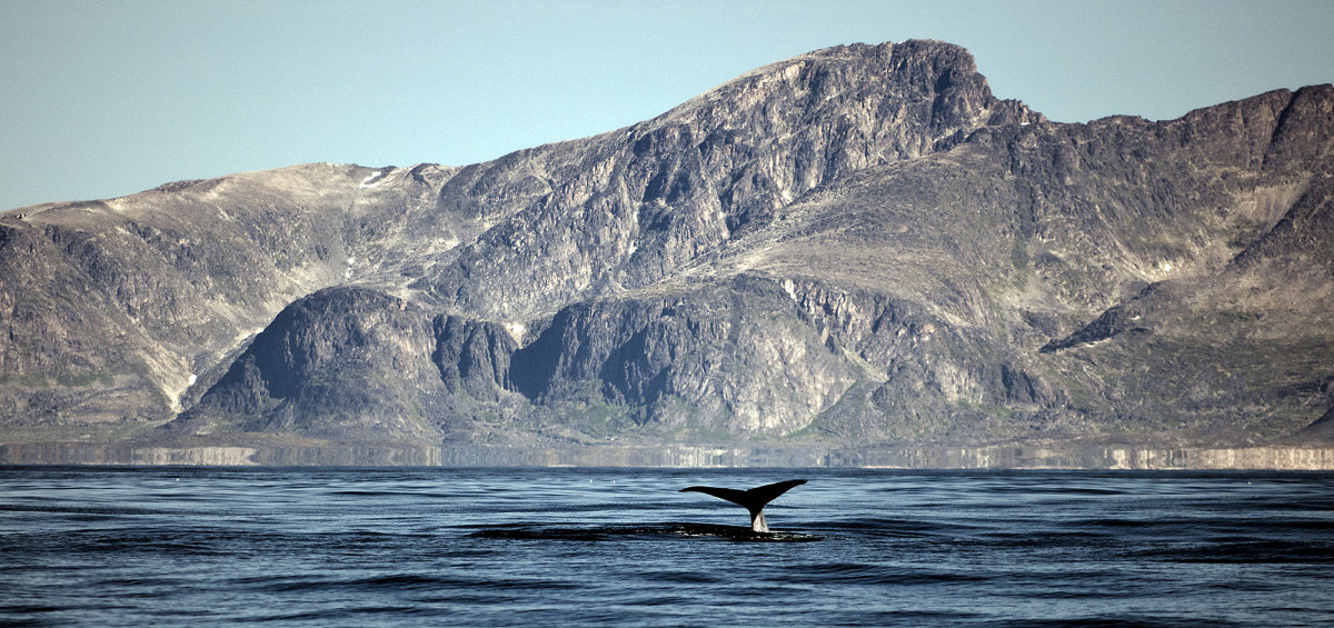 A solitary whale fluking along the journey.