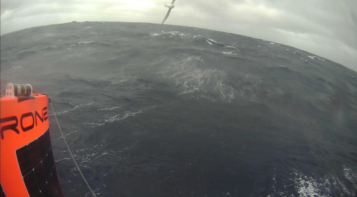 Occasionally, the saildrone onboard cameras capture images of the local wildlife. This bird is assumed to be some type of albatross.