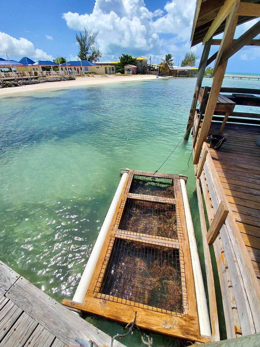 This lobster pound serves Anegada's restaurants. Most of the BVI lobsters are fished from the reef on the south and east sides of the island