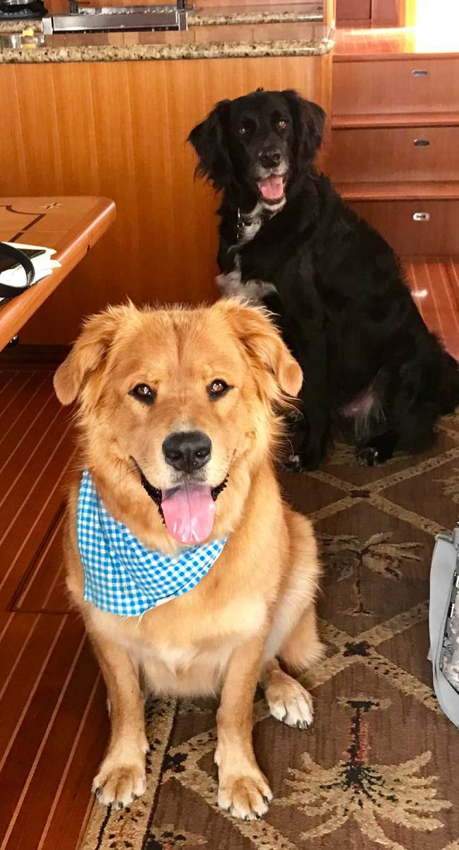 They're planning to cruise from Southern California to La Paz, Mexico, later this year with their two 90-pound dogs, Luna and Moose.
