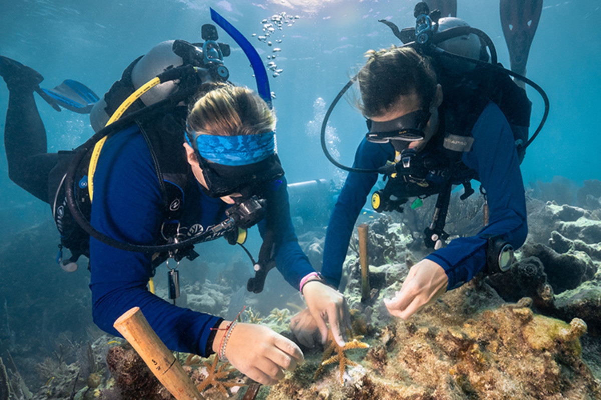 Divers outplant staghorn coral at Carysfort Reef in the Florida Keys. (Photo: Alexander Neufeld/Coral Restoration Foundation)