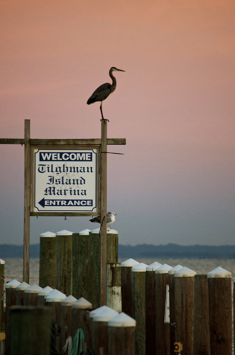 Tilghman Bay