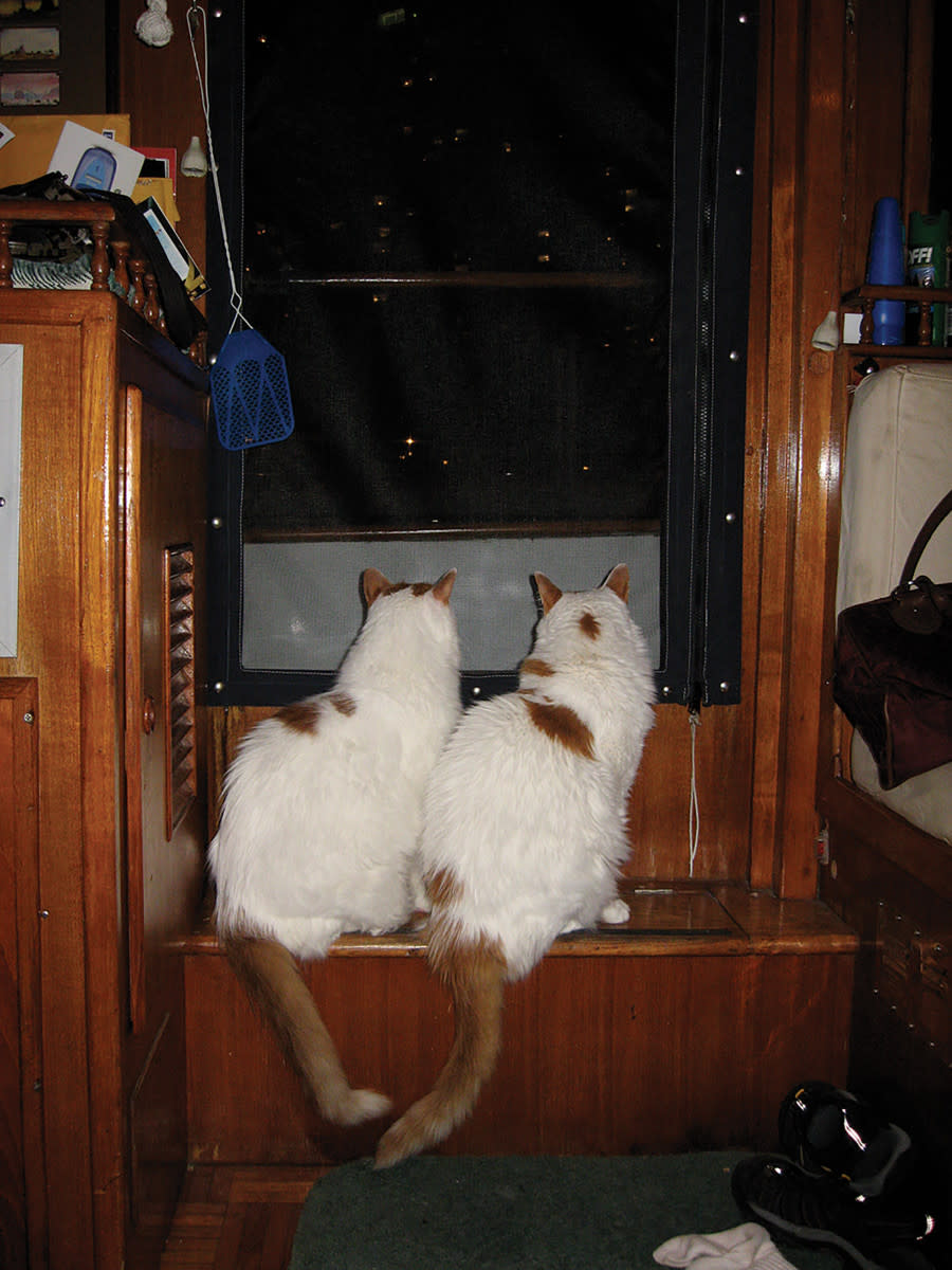 cats-img_2681