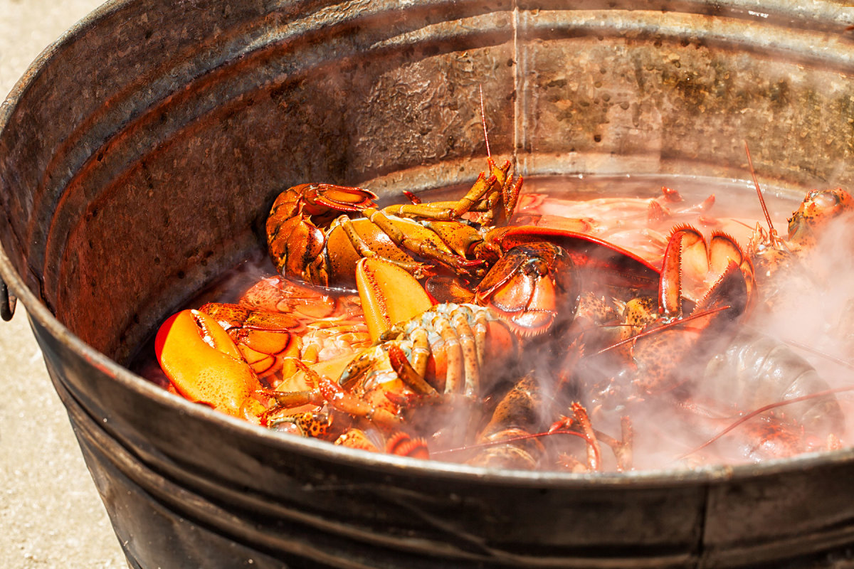 Maine lobsters on the boil.