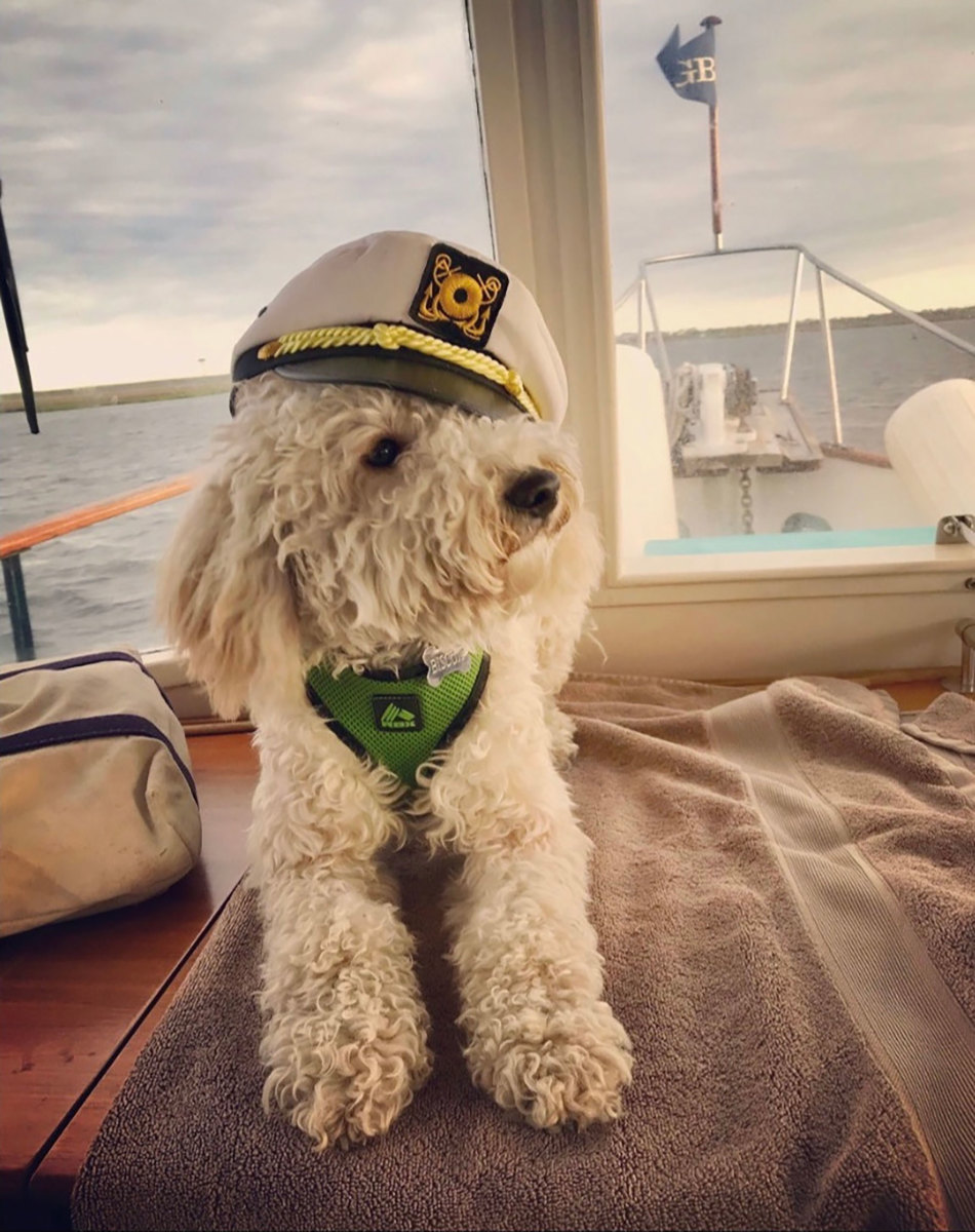 Biscuit, a miniature goldendoodle, is dressed in his cocktail-hour best. Ruff life!