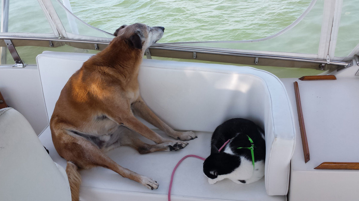 Kilo, a liveaboard cruiser aboard M/V Take A Breath, stands watch on the flybridge, while his companion, Lima, grabs a cat nap.