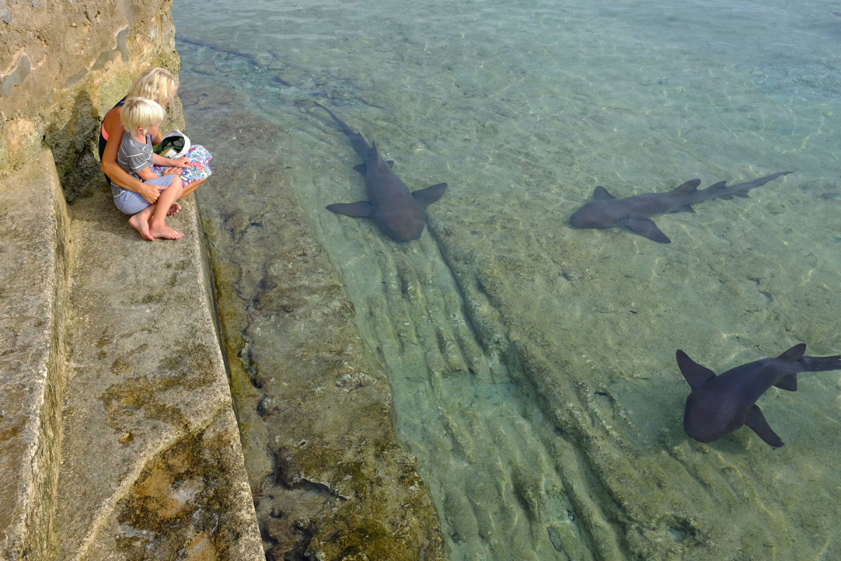 Living life with no boundaries has afforded the Schulte family experiences many can only dream about, like getting up close and personal with nature's curiosities. Here, mother and son enjoy a thrilling firsthand encounter with some friendly resident nurse sharks in the islands.