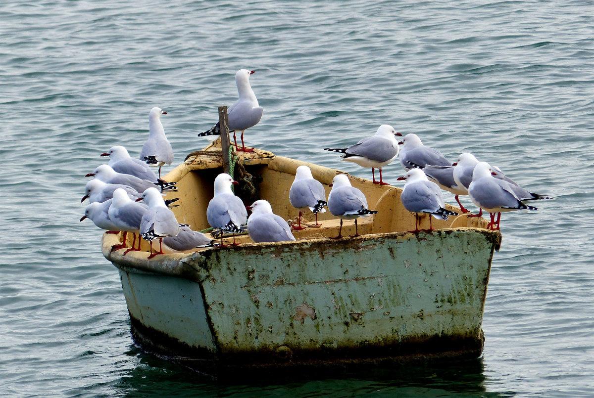 Seagulls.Boat