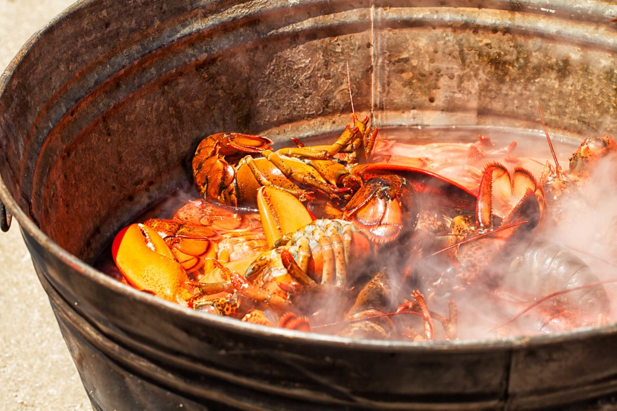 Lobsters on the boil