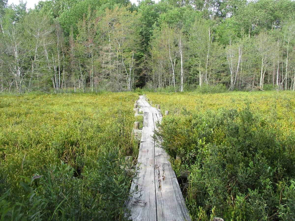 A solo hike through a Stockton Island bog along the Tombolo Trail