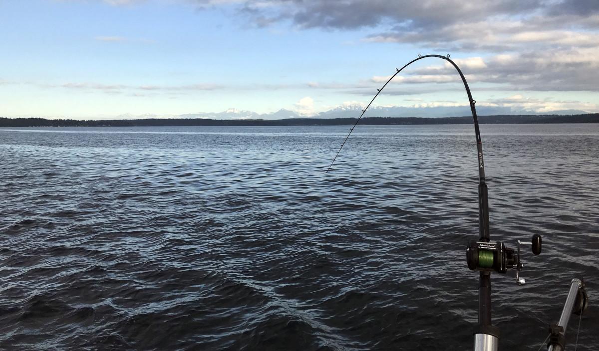 resident-coho-salmon-fishing-seattle